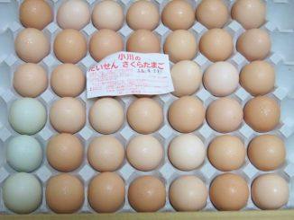 小川養鶏場 卵